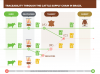 Infographic: Recommendations for Leather Traceability