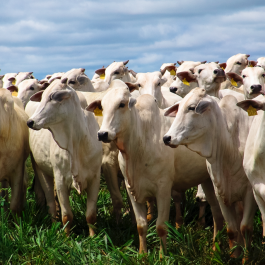 Long-term strategies of the beef industry: understanding the objectives and targets